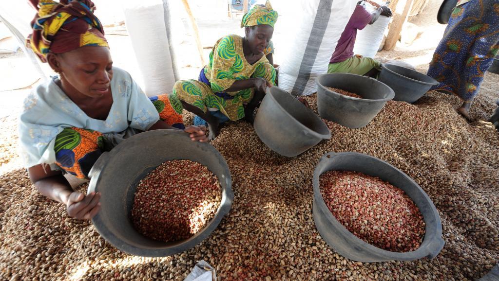 300. 000 tonnes d'arachide exportées en 2018-2019