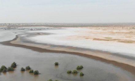 soutenue par la BAD, la désalinisation des terres donne un nouveau souffle à la production agricole