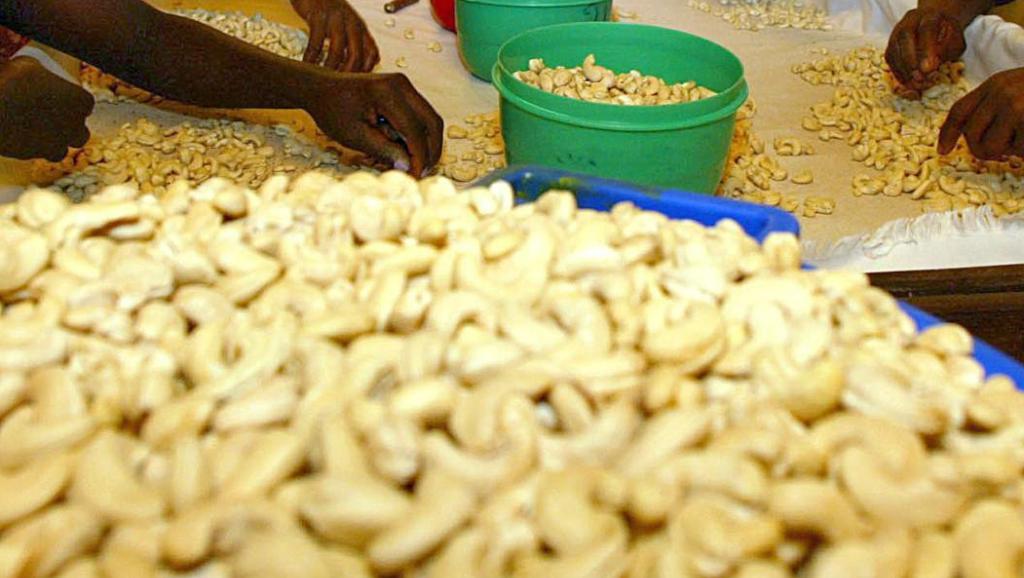 55.000 Tonnes d'anacarde exportées pour une valeur de 20 milliards Fcfa
