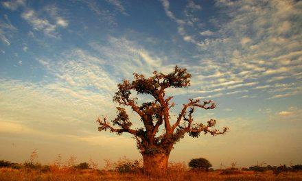 """Tourisme en Afrique: """"profitons du réveil du géant endormi"""""""
