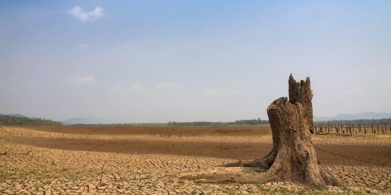 65% DES TERRES DU SAHEL SONT TOUCHÉES PAR LA DÉSERTIFICATION