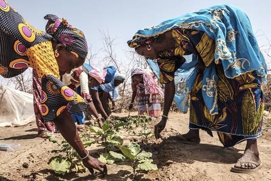 inSÉCURITÉ ALIMENTAIRE : PLAIDOYER POUR UNE AGRICULTURE DURABLE au sénégal