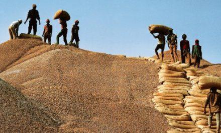 Arachide : la Sonacos juge ''importante'' la quantité des graines collectées à Louga