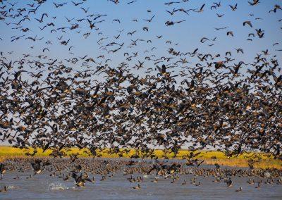 Parc National des oiseaux du Djoudj (PNOD)