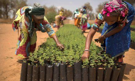 Audit de la BAD du programme de résilience à l'insécurité alimentaire au Sénégal P2RS