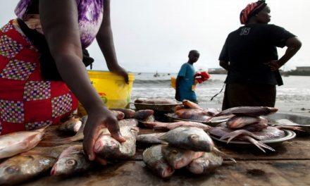 Appel à l'occasion de la journée internationale de la femme pour l'arrêt des usines de farine et d'huile de poisson