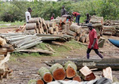 Trafic de bois entre la Gambie et le Sénégal : Abdou Karim Sall annonce des mesures