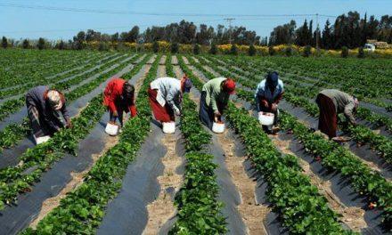Agriculture/Sénégal: préparation de la campagne agricole selon les régions