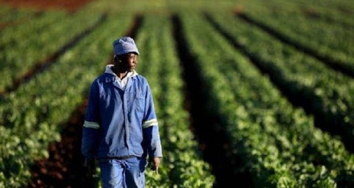Banque mondiale: Renforcer l'agriculture et la sécurité alimentaire au Sénégal face au COVID-19