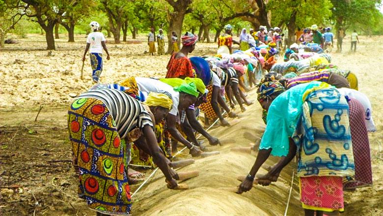 Banque mondiale: Renforcer l'agriculture et la sécurité alimentaire au Sénégal face au COVID-19 1