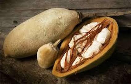 Le fruit du baobab: le pain de singe 6