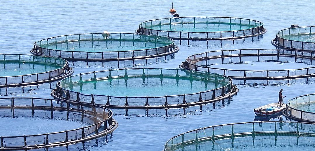Aquaculture: La levée des contraintes va favoriser le développement de l'activité