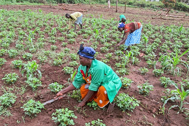 Le Sénégal veut produire 80% de ses besoins alimentaires