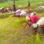 RIZICULTURE ET MARAÎCHAGE: DES MESURES URGENTES POUR LES ENTREPRISES