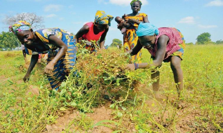 Enfin les paysans de Ndingler pourront regagner leurs champs