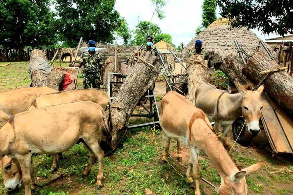 Trafic de bois se persiste au Sénégal