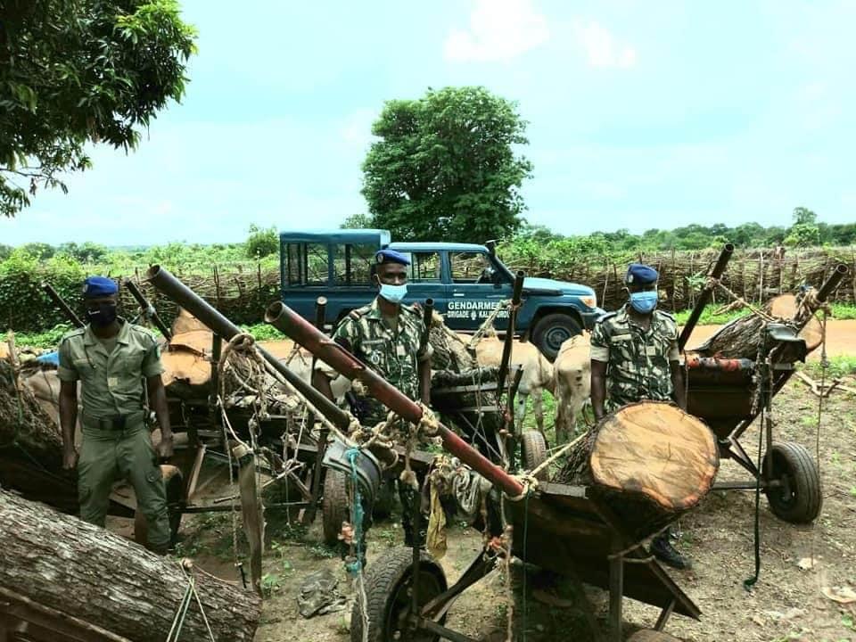 Trafic de bois se persiste au Sénégal 1