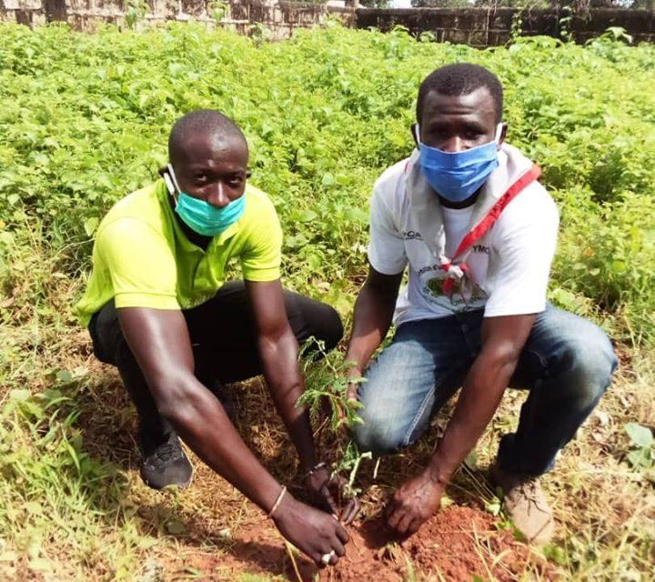 Journée de l'arbre: MACKY SALL RECOMMANDE DE PLANTER DES ARBRES POUR REVERDIR LE PAYS