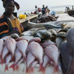 Pénurie de poissons : Alioune Ndoye au secours des populations