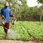 foncier Sénégal: Les nouvelles dispositions du chef d'état