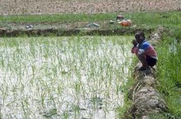 Partenariat entre OCP Africa et l'IFC pour renforcer les filières du riz en Côte d'Ivoire et du millet au Sénégal