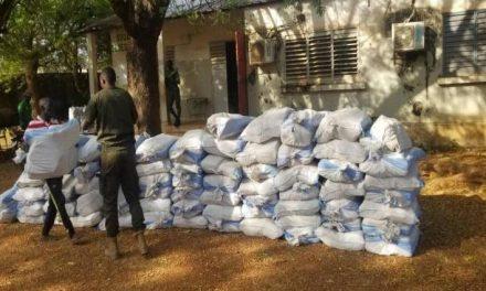 Kidira : La Douane saisit 1 376 kg de chanvre indien