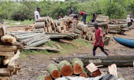 lutter contre la déforestation en casamance
