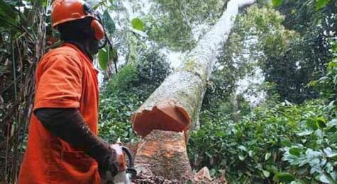 lutter contre la déforestation en casamance 2