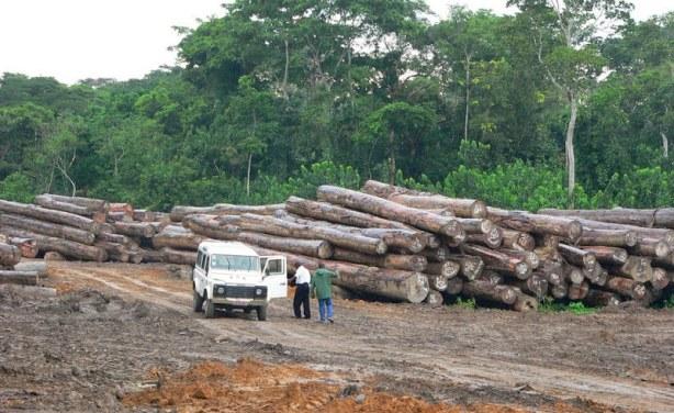lutter contre la déforestation en casamance 1