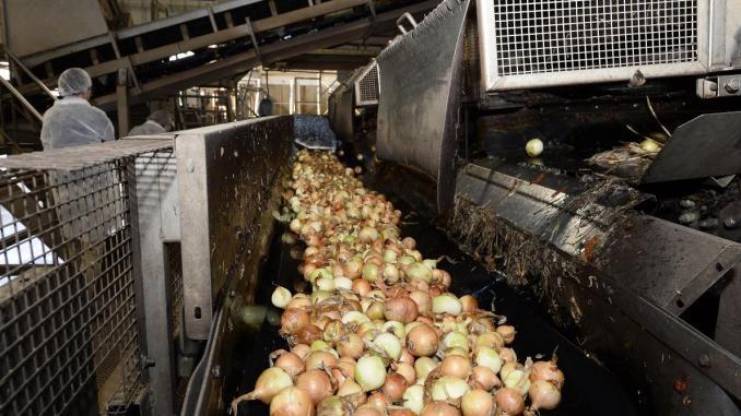 première usine de déshydratation d'oignons en Afrique d'une valeur de 13 millions d'euros implantée au Sénégal