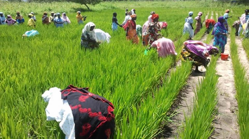 A Thiago, les femmes réclament des moyens pour augmenter leur production agricole