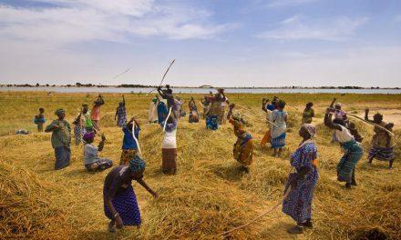 BAD : la création d'emploi et la promotion des femmes parmi les priorités post Covid-19 pour l'Afrique