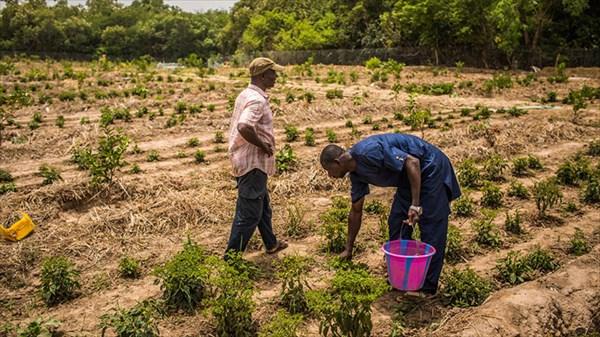 La Banque mondiale alloue 60 millions de dollars pour renforcer la résilience de l'agriculture en Afrique