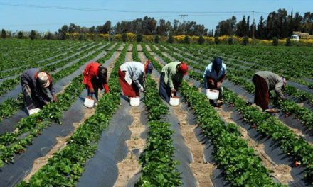 Le Sénégal écarte une éventuelle situation d'insécurité alimentaire cette année