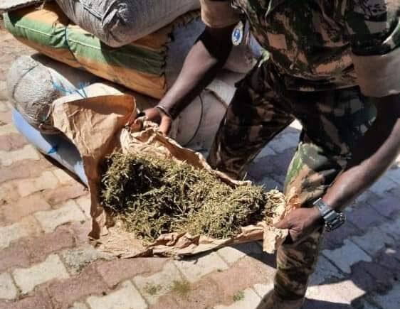 Fatick : 263 kg de chanvre indien saisis