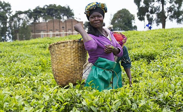 agriculture biologique: L'AFRIQUE DOIT PROFITER DU POTENTIEL DE SES SAVOIRS LOCAUX