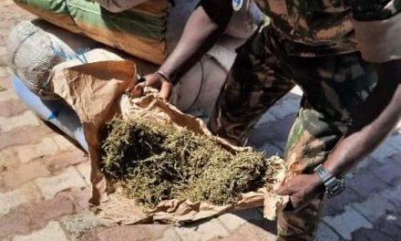 Saisie de 1650 kg de chanvre, médicaments et de faux euros à KAOLACK et MBOUR