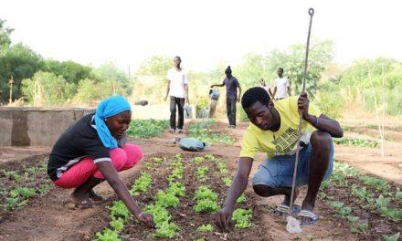 la FAO soutient la formation de 15.000 jeunes dans les métiers de l'agriculture