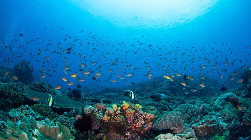 le gouvernement s'équipe pour la préservation des aires marines protégées