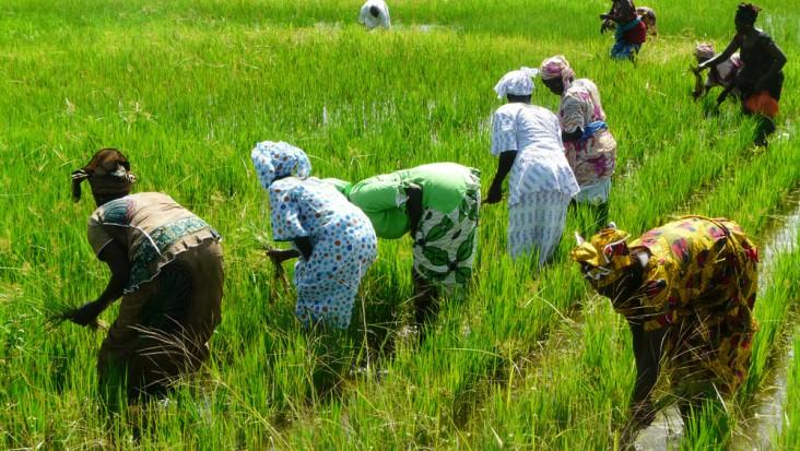 36 milliards CFA EN FAVEUR DE L'AGRICULTURE DURABLE ET DE LA PROTECTION DE LA BIODIVERSITÉ