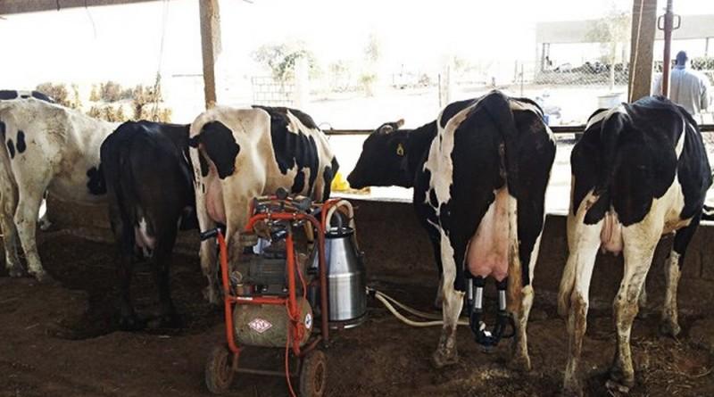 Une industrie laitière installée à Reffane
