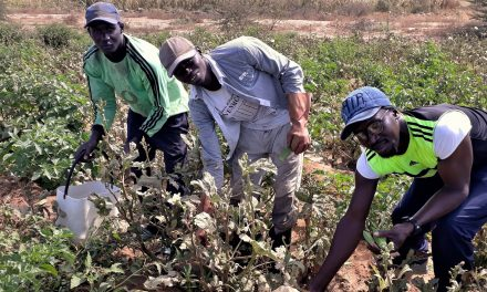 CASAMANCE: 2 milliards FCFA pour 2.500 projets de jeunes