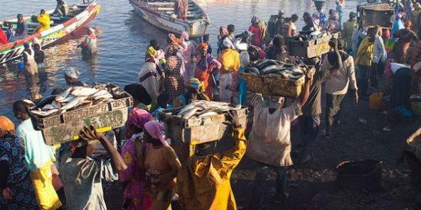 Les pêcheurs sénégalais autorisés à pêcher dans les eaux mauritaniennes