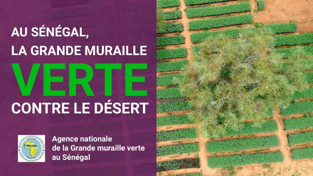 LA GRANDE MURAILLE VERTE VISE UN TAUX DE SURVIE DE 80% POUR SES PLANTATIONS 1