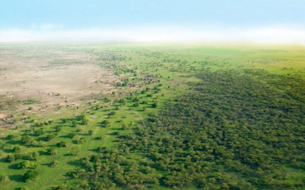 LA GRANDE MURAILLE VERTE VISE UN TAUX DE SURVIE DE 80% POUR SES PLANTATIONS