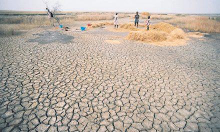 CHANGEMENT CLIMATIQUE : UN PLAN D'ACTION RÉGIONAL POUR L'AGRICULTURE EN GESTATION À LOUGA